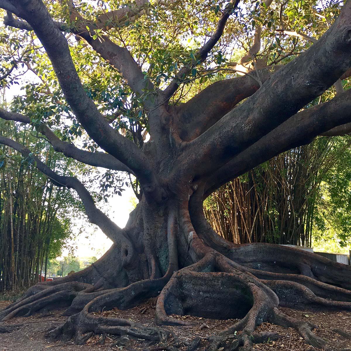 50_tree
